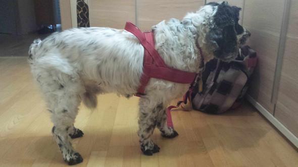 Tadaa - (Hund, Haustiere)