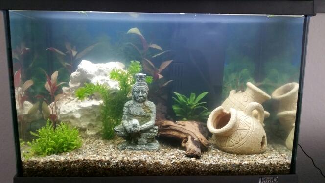 Passt so die einrichtung im aquarium tiere fische for Aquarium einrichtung