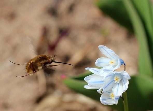 Welches Insekt ist das wohl? - (Biologie, Insekten)