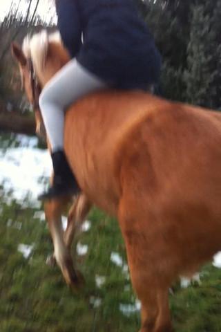 Ausschnitt aus dem video, bevor sie buckeln wollte  - (galloppieren, Pferd buckelt)