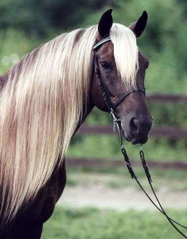 rappwindfarbgen - (Pferde, Farbe)
