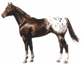Wie hier - (Pferde, Pferderassen)