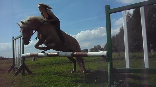 pferd springt mauer nicht sport pferde springreiten. Black Bedroom Furniture Sets. Home Design Ideas