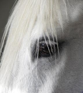 Bilduntertitel eingeben... - (Pferde, Lebensmittel, Nahrung)