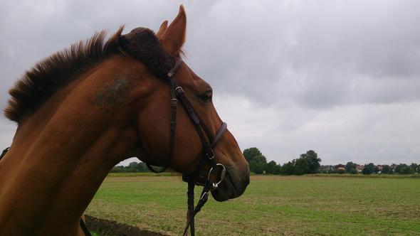 waitano<3 - (Pferde, Frisur, Reiten)