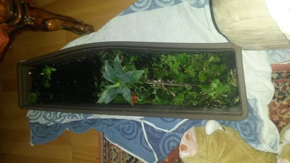 was ist das - (Pflanzen, Spanien-Pflanze)