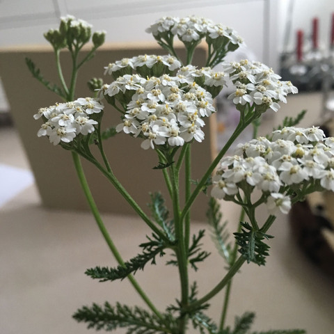 Pflanze  - (Biologie, Pflanzen, Botanik)