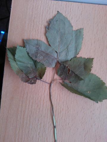 Pflanze 2 - (Schule, Biologie, Pflanzen)