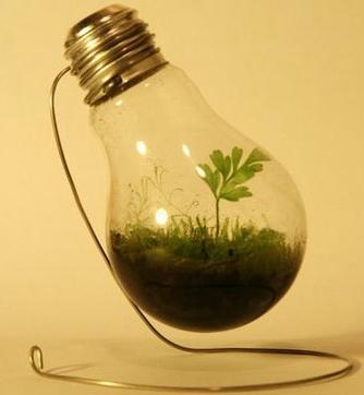 pflanze in gl hbirne wasser garten pflanzen. Black Bedroom Furniture Sets. Home Design Ideas