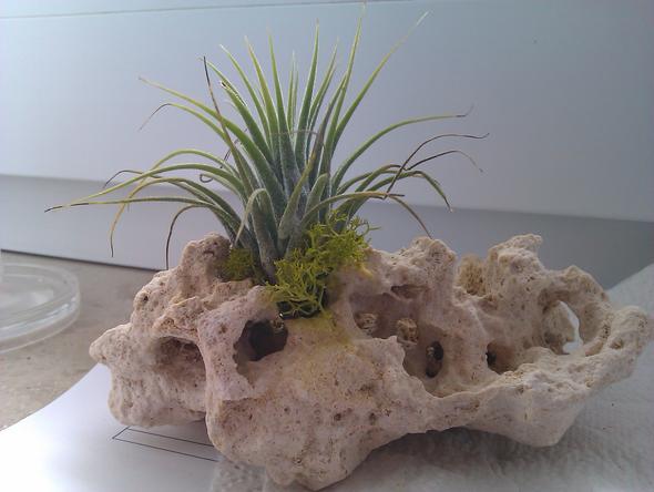 Pflanze - (Botanik, Steine, Gärtner)