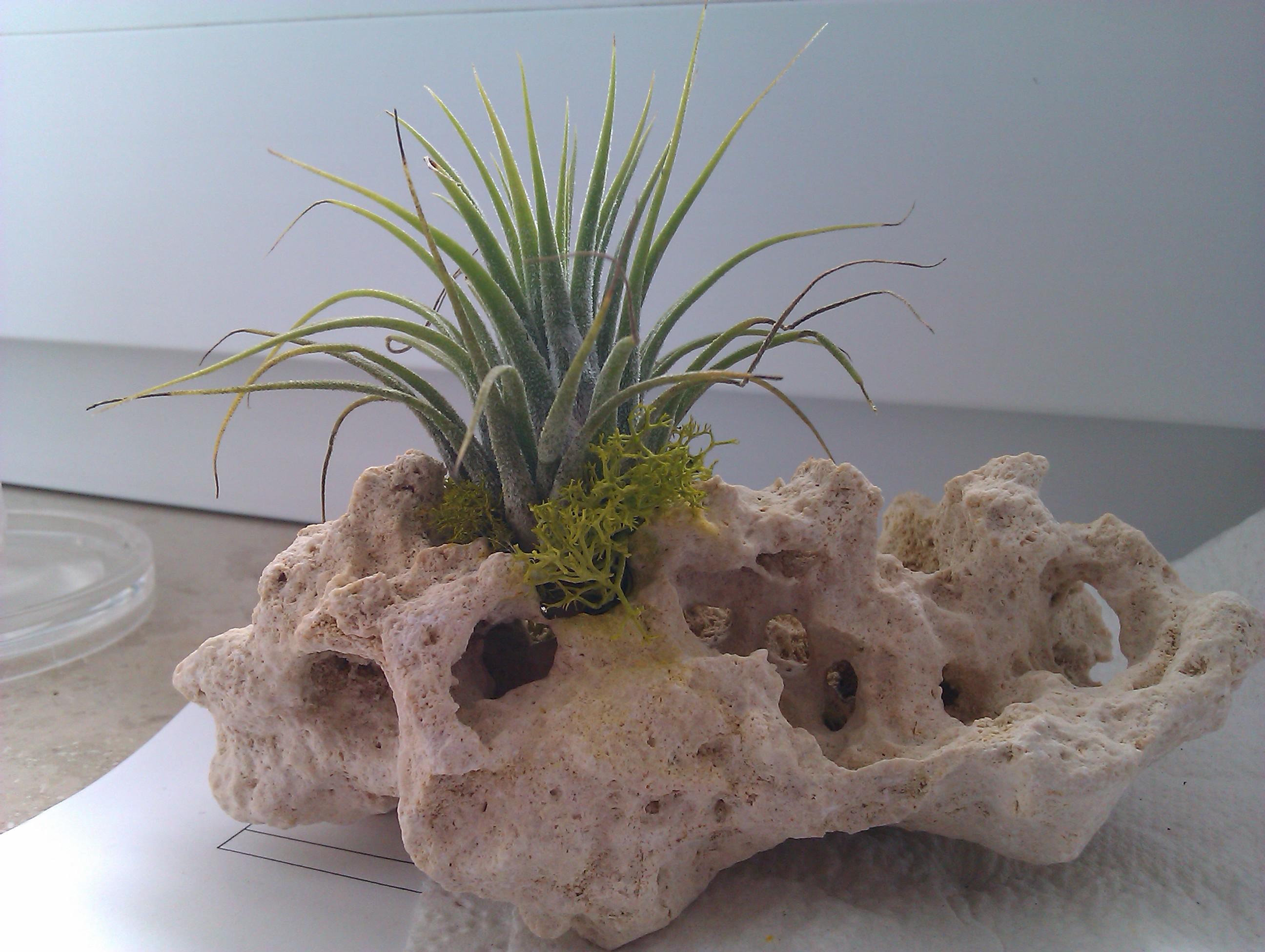 pflanze in stein botanik steine g rtner. Black Bedroom Furniture Sets. Home Design Ideas