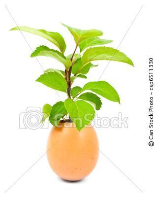 Bild - (Pflanzen, Eier)