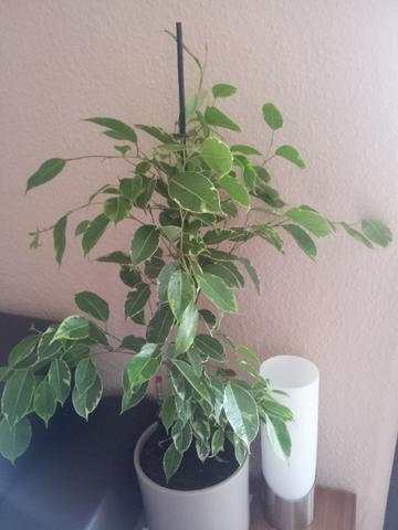 Pflanze - (Pflanzen, Pflanzenpflege)