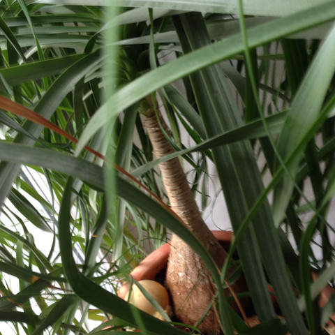 Pflanze  - (Pflanzen, Art)