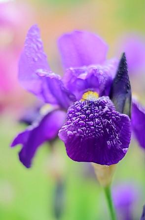 Pflanzenbestimmung - lila Blüte? (Pflanzen, Blumen, Bestimmung)