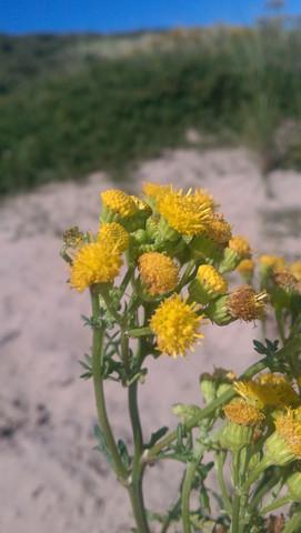 Nahaufnahme - (Garten, Pflanzen, Natur)