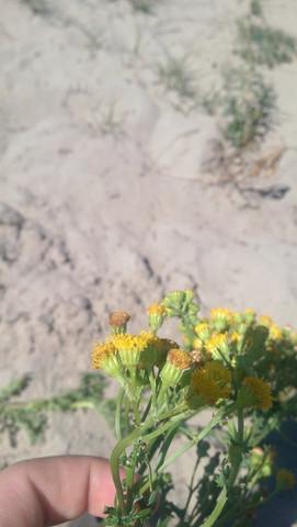 Blüte  - (Garten, Pflanzen, Natur)