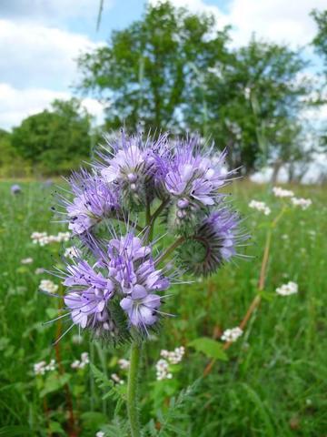 Pflanzenbestimmung 2: Wie heißt diese Blume bzw. Pflanze ...