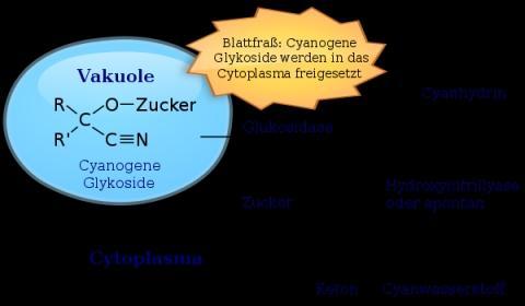 entstehung des Pfanzengifts - (Chemie, Biologie, Pflanzen)