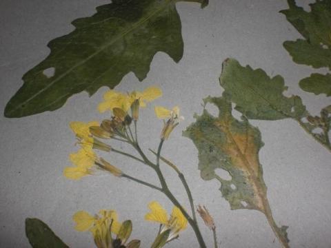 das ist die pflanze - (Biologie, Pflanzen, Natur)