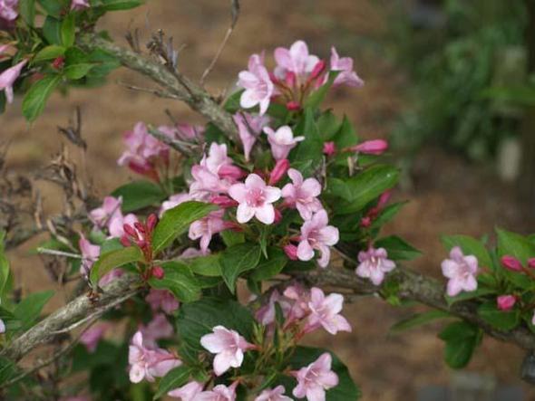 nah - (Biologie, Pflanzen, Blumen)