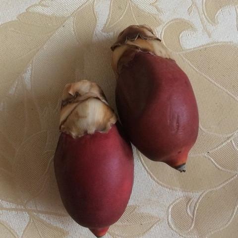 Dreimal  - (Pflanzen, Zucht, Palme)