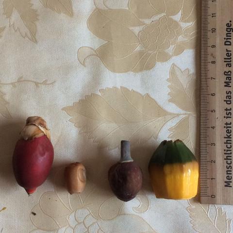Hier mal um die Größe einschätzen zu können   - (Pflanzen, Zucht, Palme)