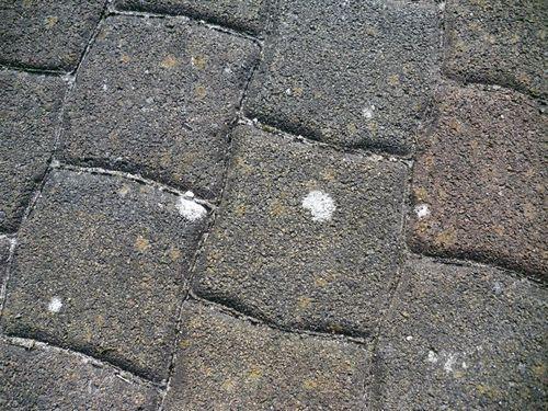 pflastersteine1 - (Reinigung, Pflastersteine)