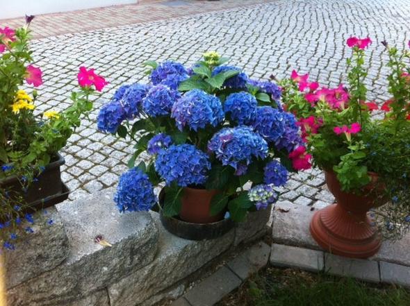 ein Schmuckstück - (Garten, Blumen, Pflanzenpflege)