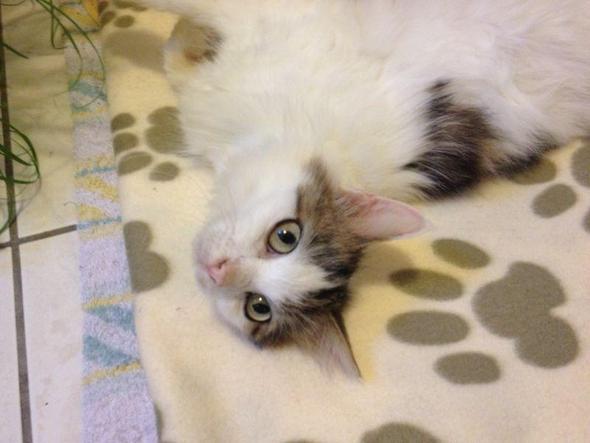 hübsches Gesichtchen - (Katze, Katzen, Kater)