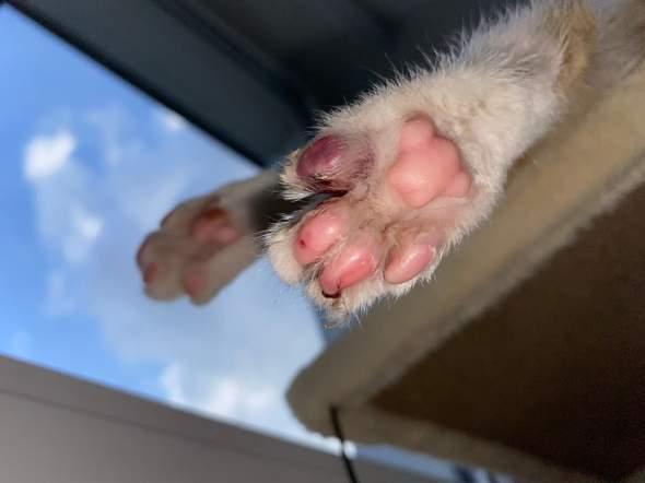 - (Katze, Verletzung)