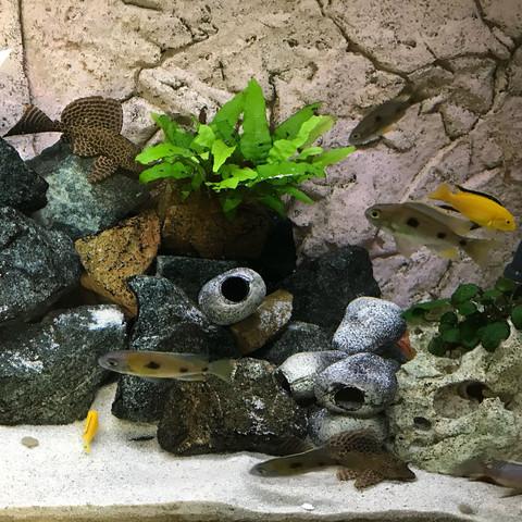 ph wert im malawibecken erh hen aquarium ph wert malawi. Black Bedroom Furniture Sets. Home Design Ideas