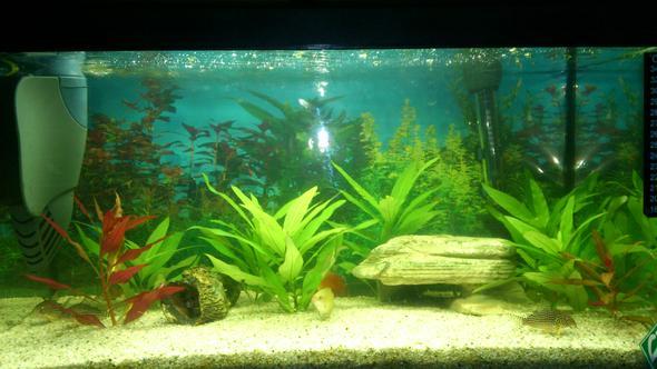 ph wert von 4 5 gr nes wasser aquarium blasen. Black Bedroom Furniture Sets. Home Design Ideas