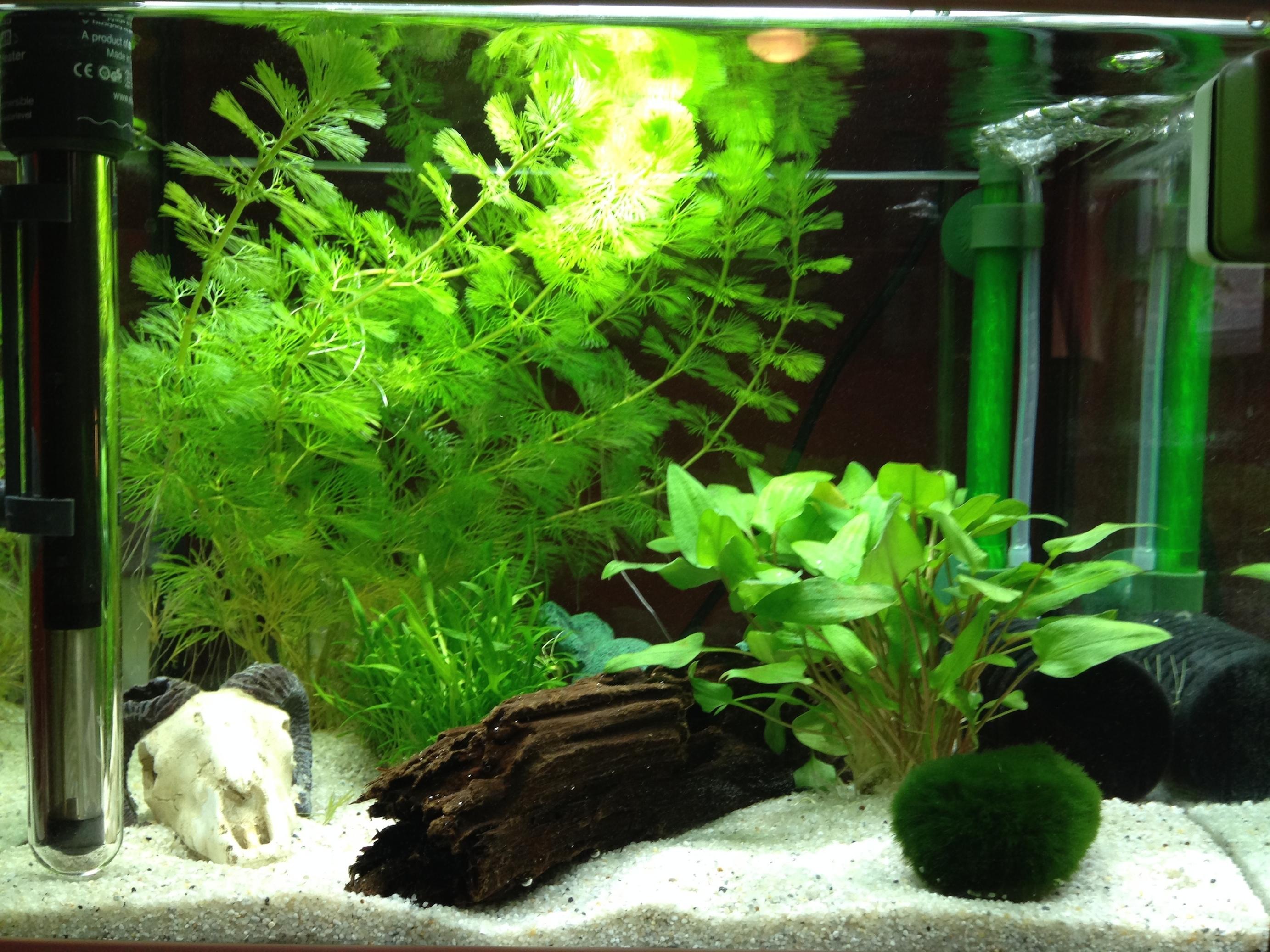 ph wert von aquarium durch nicht chemische mittel dauerhaft senkbar chemie aquaristik garnelen. Black Bedroom Furniture Sets. Home Design Ideas