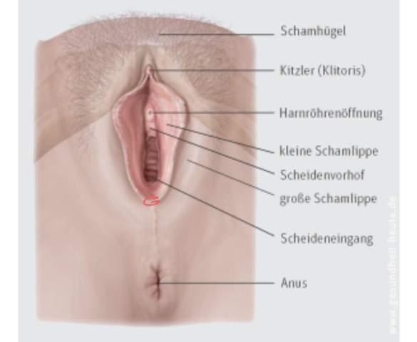An der vagina pickel kleine pickel