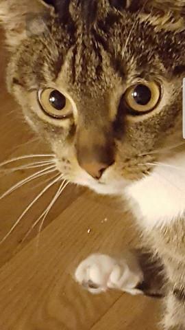 Vor 2 Monaten - (Augen, Katze, Gesundheit und Medizin)