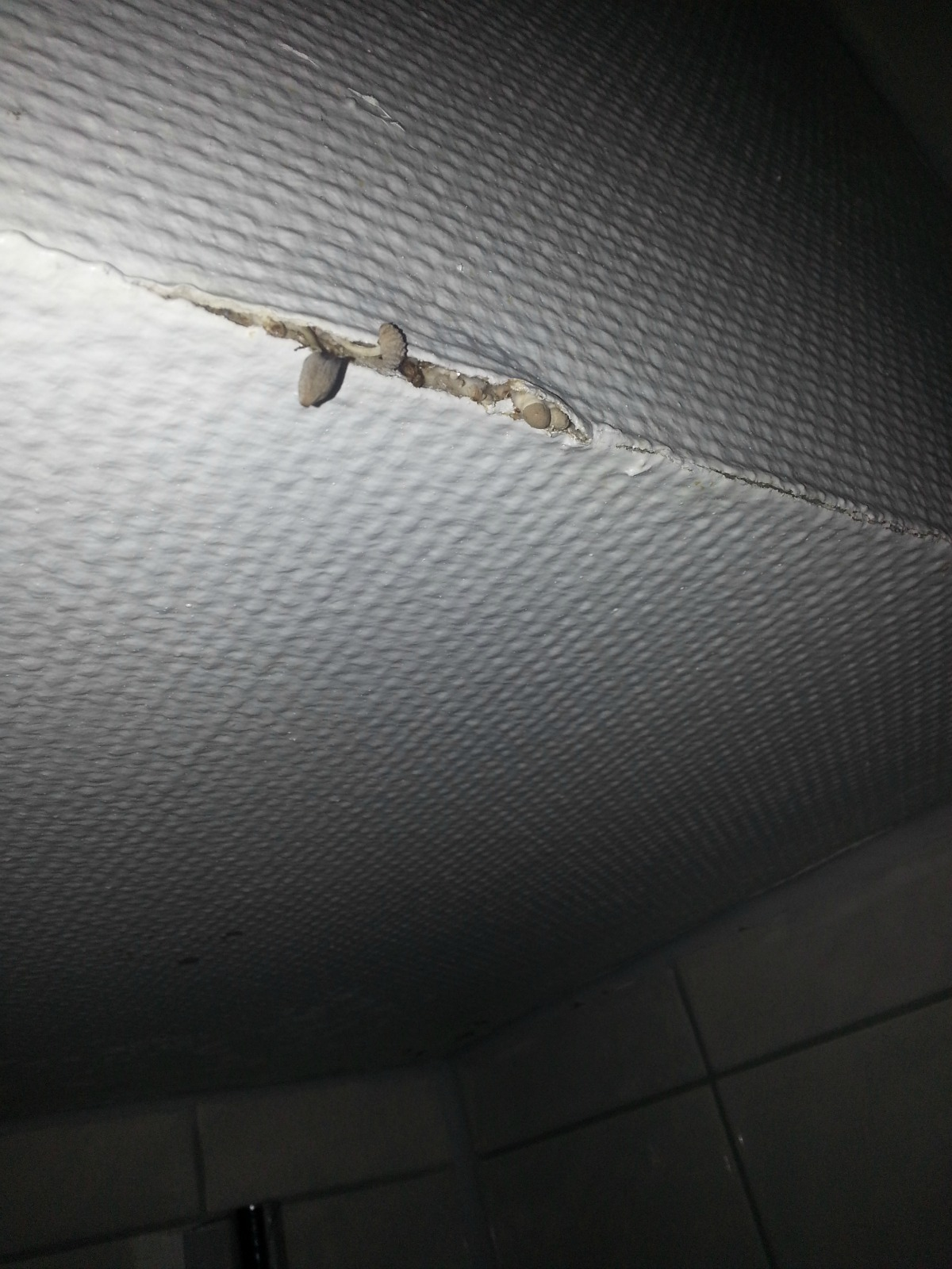 pilz aus der wand im raum der dusche gesundheit schimmel pilze. Black Bedroom Furniture Sets. Home Design Ideas