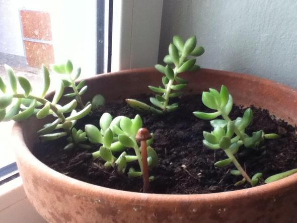 pilz aus einer pflanze gewachsen bild pflanzen pilze. Black Bedroom Furniture Sets. Home Design Ideas