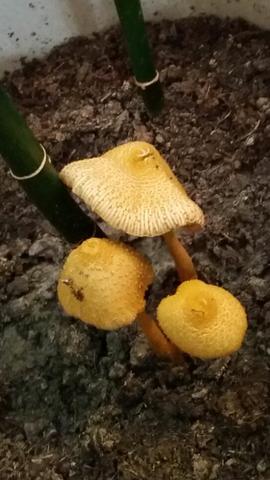 Pilz - (Wohnung, Pilze, giftig)