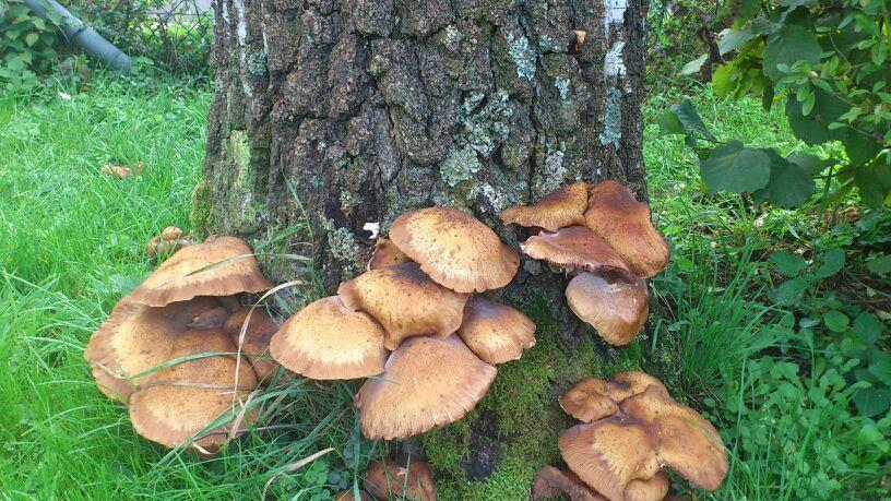 Welche Pilze Kann Man Essen