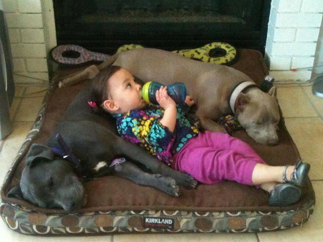 What Kind Of Dog Food Is Good For Pitbulls