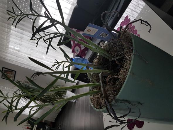Planze trocknet aus pflanzen trockner
