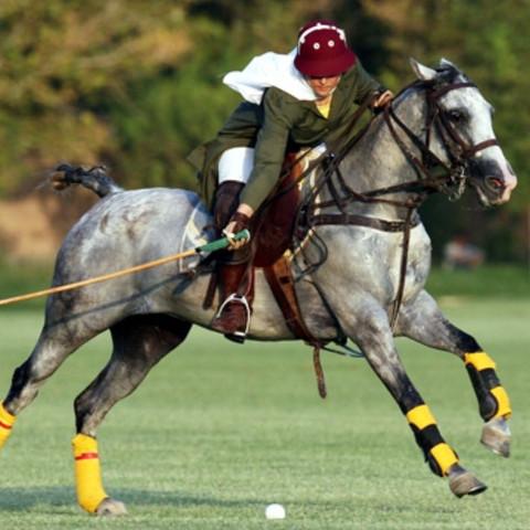 Bild von Poloreiterin aus dem Internet Pferdekopf in der Höhe - (Pferde, Reiten, Dressur)