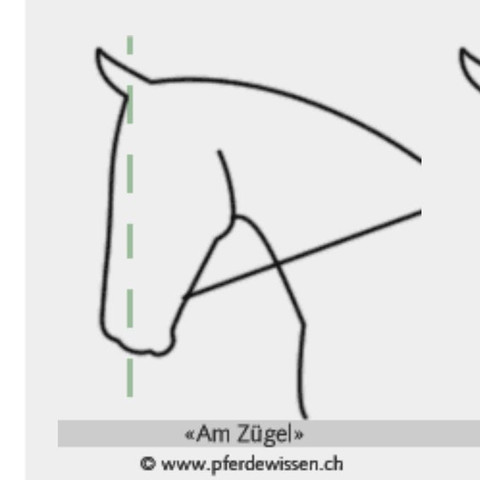 Beispiel Bild eines Pferdes am Zügel aus dem Internet - (Pferde, Reiten, Dressur)