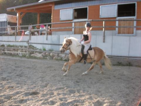 - (Pferde, Reiten, Dressurreiten)