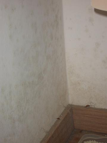 Problem mit wand und vermieterin schimmel boden - Wand feucht was tun ...