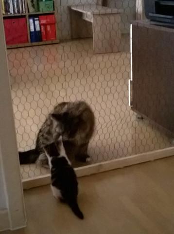 Bild 1 - (Tiere, Katze, vergesellschaftung)