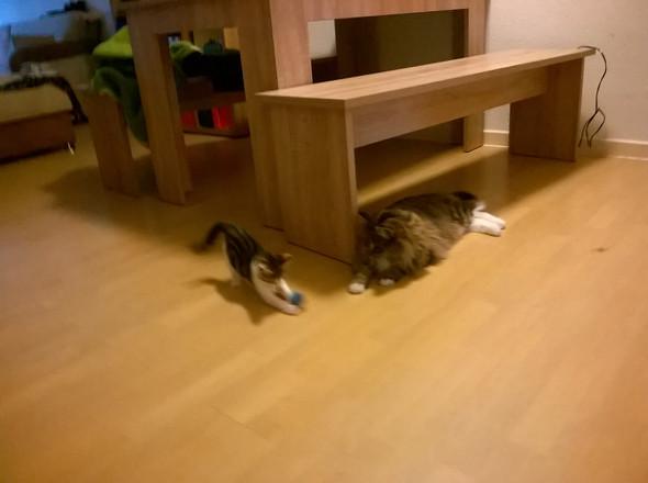 Bild 3 - (Tiere, Katze, vergesellschaftung)