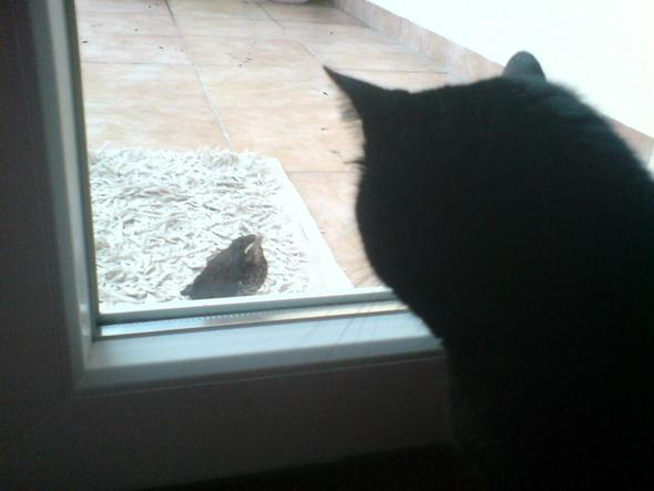 Katze vs Vogel - (Tiere, Biologie, Katze)