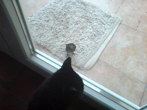 Katze vs. Vogel - (Tiere, Biologie, Katze)